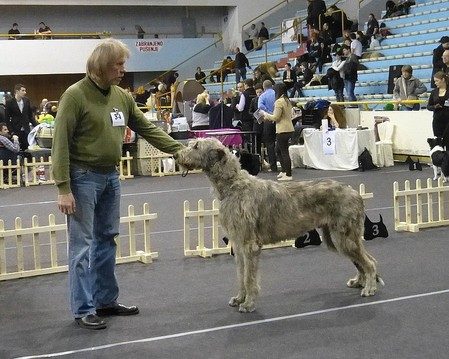 EX1 Best Junior Crufts Qualification Hubert vom Alpetal