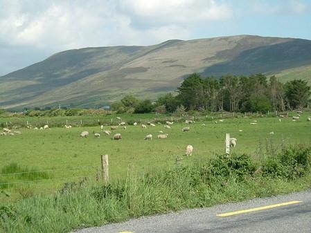 Zurück nach Moone wählen wir den Weg durch die Teermoyle Mountains.
