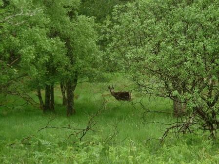 Unfasslich, nur 2 m von uns entfernt Hirschkühe.