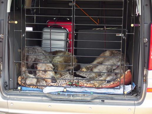 Hillie Billie und Rosa in ihrer fahrenden Hundehütte