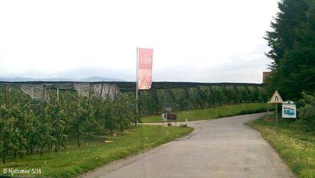 Ausgedehnte Spaziergänge in den Obstplantagen nur 200 m vom Gasthaus entfernt.