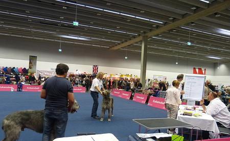 Ausstellunghalle Innsbruck mit sehr freundlichem Ringpersonal