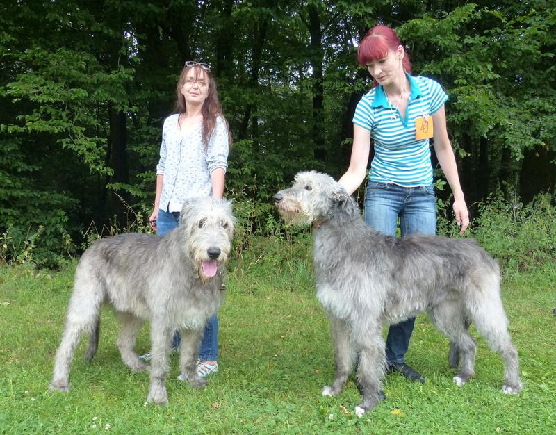 Tassilo und Tessa vom Alpetal, 8,5 Jahre alt in Lindlar, 8.8.2015