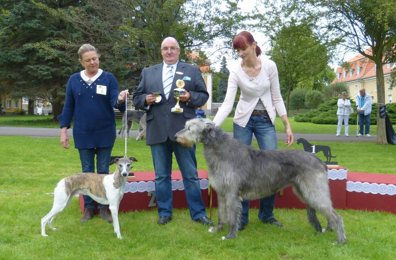 Best In Show Veteranen Platz 1 Tessa