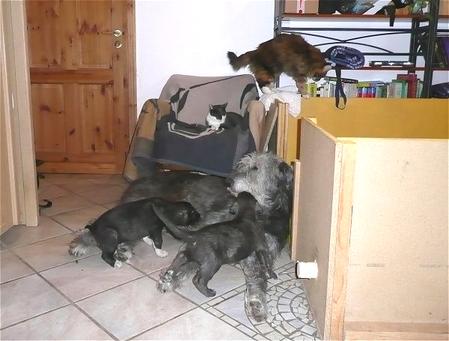 Jeannie mit Bonsai und Babuschka, und zwei von unseren Katzen, Blue und Paddy