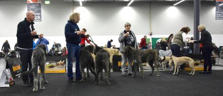 Traditionell beginnt jede Ausstellung beim Irish Wolfhound Club mit einem Sektempfang. Hier auf dem Foto René mit Kuno, Jürgen mit Bärchen und Betty, sowie Regina mit Olga