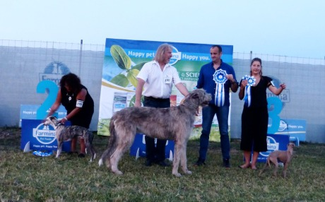 Best In Show Group 10 Neuschwanstein Vernon