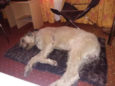 Moritz und seine Decke