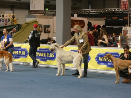 Best In Show Gruppe 10