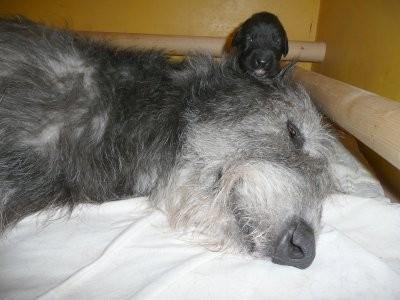 Rowena mit Baby am 17. Tag
