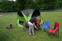 Viktoria bereitet die Hunde vor