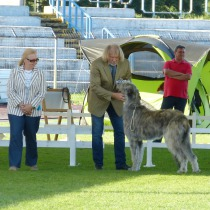 9.9. 2nd BIS Gr. 10 BOB CACIB CAC Queen Mary vom Alpetal